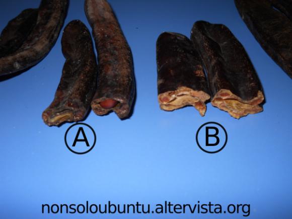 Differenza tra carrubo prodotto da albero non innestato (A) e innestato (B) - Frutto spezzato